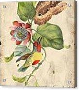 Vintage Bird Study-b Acrylic Print