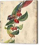 Vintage Bird Study-h Acrylic Print