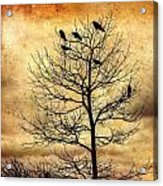 Vintage Blackbirds On A Winter Tree Acrylic Print