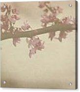 Vintage Bloom Acrylic Print