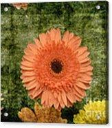 Vintage Blooms Acrylic Print