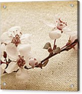Vintage Blossoms Acrylic Print
