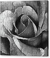 Vintage Cracked Rose Acrylic Print
