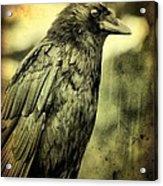 Vintage Crow Acrylic Print