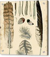 Vintage Feather Study-a Acrylic Print