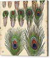 Vintage Feather Study-jp2084 Acrylic Print