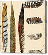 Vintage Feather Study-jp2085 Acrylic Print