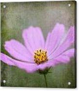 Vintage Flower Acrylic Print