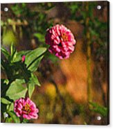 Vintage Flower Acrylic Print by Rhonda Humphreys