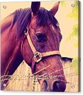 Vintage Horse Acrylic Print