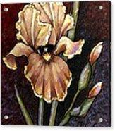 Vintage Iris Acrylic Print