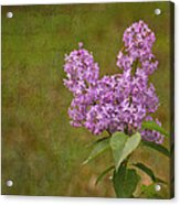 Vintage Lilac Bush Acrylic Print