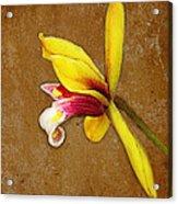 Vintage Orchid Acrylic Print