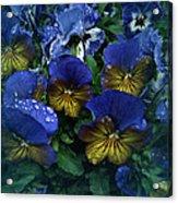 Vintage Pansy Drops Acrylic Print