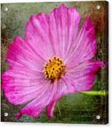 Vintage Pinc Flower Acrylic Print