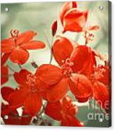 Vintage Red Flowers Acrylic Print