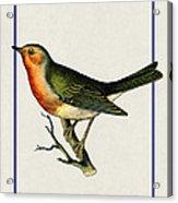 Vintage Robin Vertical Acrylic Print