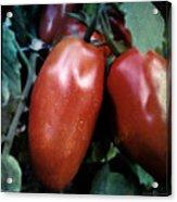 Vintage Romas Acrylic Print