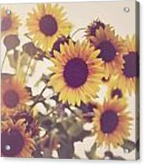 Vintage Sunflowers In The Garden Acrylic Print