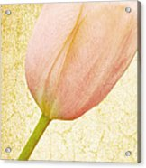 Vintage Tulip Acrylic Print by Lesley Rigg