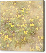 Viola Field Acrylic Print