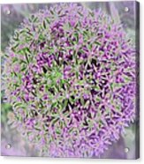Violet And Green Acrylic Print