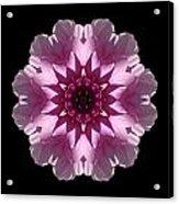 Violet And White Dahlia I Flower Mandala Acrylic Print
