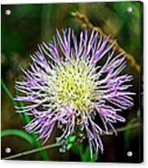Violet And Yellow Flower Acrylic Print