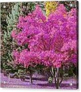 Violet Autumn Acrylic Print
