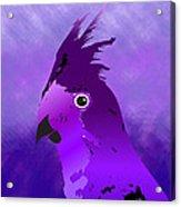 Violet Cockatiel Acrylic Print