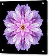 Violet Dahlia I Flower Mandala Acrylic Print
