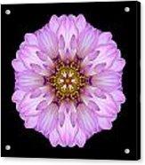 Violet Dahlia II Flower Mandala Acrylic Print