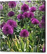 Violet Flowerbed Acrylic Print