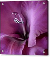 Violet Passion Gladiolus Flower Acrylic Print