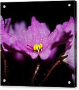 Violet Prayers Acrylic Print