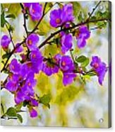 Violet Quince Acrylic Print