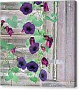 Violet Vine - Photopower 324 Acrylic Print