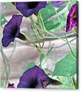 Violet Vine - Photopower 326 Acrylic Print