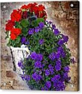 Violets And Geraniums On The Bricks Acrylic Print