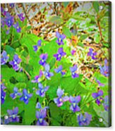 Violets Acrylic Print by Debbie Sikes