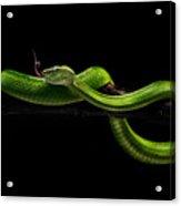 Viper One Acrylic Print