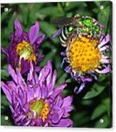 Virescent Metallic Green Bee Acrylic Print