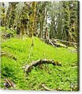 Virgin Mountain Rainforest Of Marlborough Nz Acrylic Print