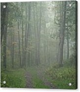 Virginia - Shenandoah National Park - Road Not Taken Acrylic Print
