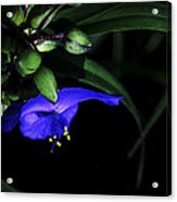 Vision Of Purple Acrylic Print