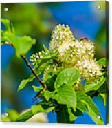 Vision Of Spring - Featured 3 Acrylic Print