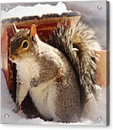Visiting The Outhouse Acrylic Print