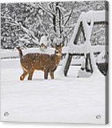 Visiting Winter Buck Acrylic Print