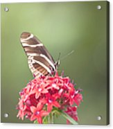 Visitor In The Garden Acrylic Print