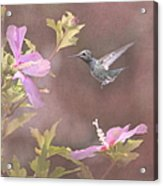 Visitor In The Rose Of Sharon Acrylic Print